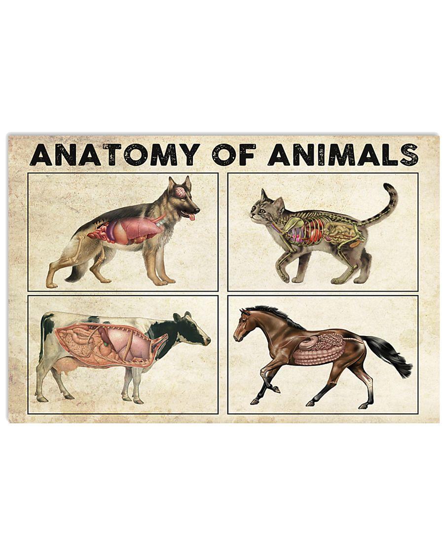 Anatomy-Of-Animals-Poster